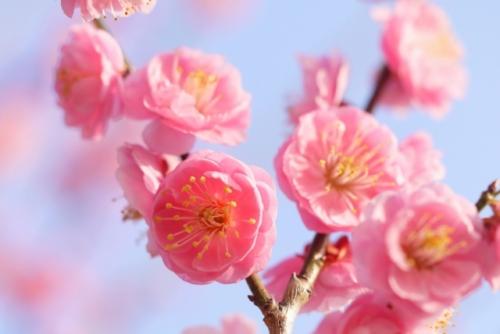 春先とはいつ頃?早春、立春、新春、迎春、初春もまとめて解説!